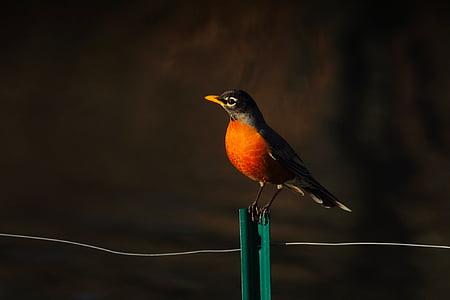 ptica, biljni i životinjski svijet, vuga, ograda, žica, kolac, lijepa
