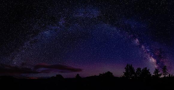 naturaleza, árboles, silueta, noche, cielo, estrellas, Astronomía