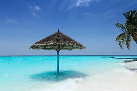 Maladewa, pohon palem, Pantai, musim panas, matahari, air, dipesan