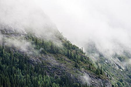 хвойних дерев, ялинки, туман, Туманний, ліс, туманні, краєвид