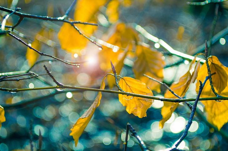 lehed, kollane, Sunshine, päike, Värv, loodus, looduslik