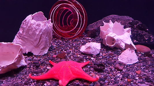 estrella de mar, SeaStar, oceà, Mar, estrella, platja, l'aigua