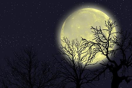 täielik, Moon, planeedi, puud, siluett, taevas, Tähistaeva