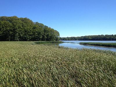 myr, Lake, Sommer, våtmarksområde, fjæra, naturlig