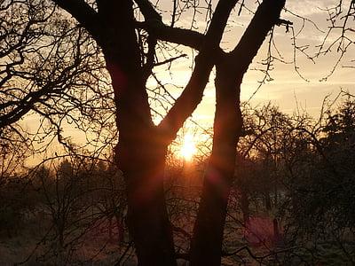 Alba, idil·li d'hivern, morgenrot, cels, l'hivern, Gebre, arbres