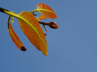 lá, bầu trời, Thiên nhiên, màu xanh lá cây, thực vật, bùng nổ, đầu tiên bùng phát