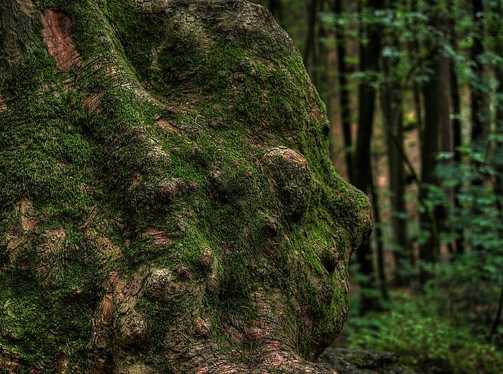 baumstammm, knarzig, 모스, 숲, 그린, bemoost, 자연
