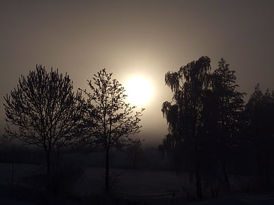 winter mood, winter, sun, morning, go up, winter picture, trees