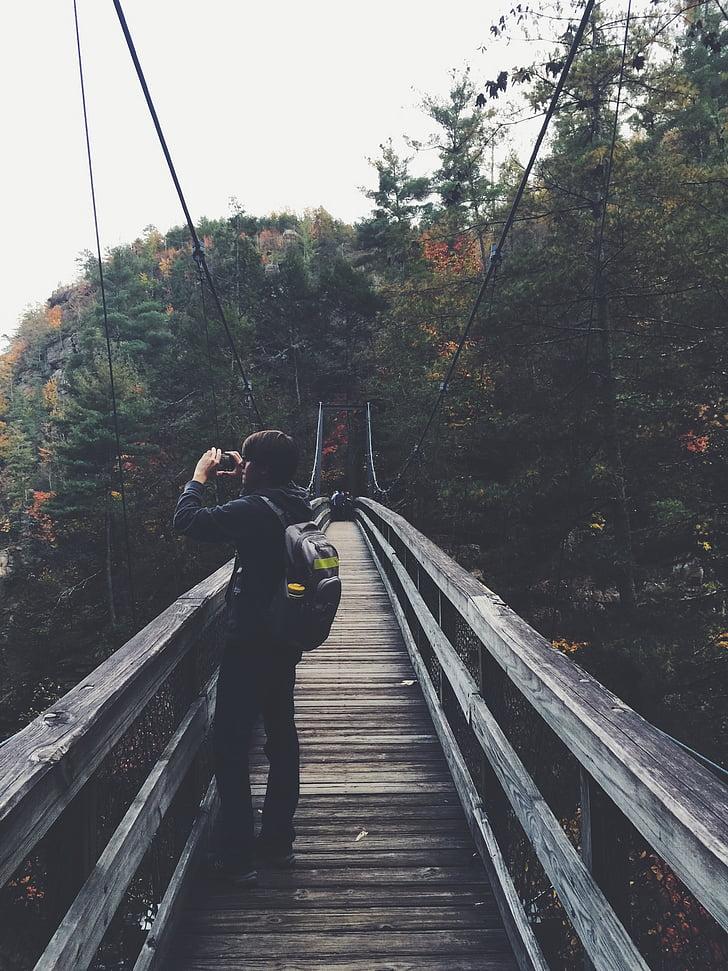 piedzīvojums, tilts, Foot bridge, meža, vīrietis, daba, fotogrāfs