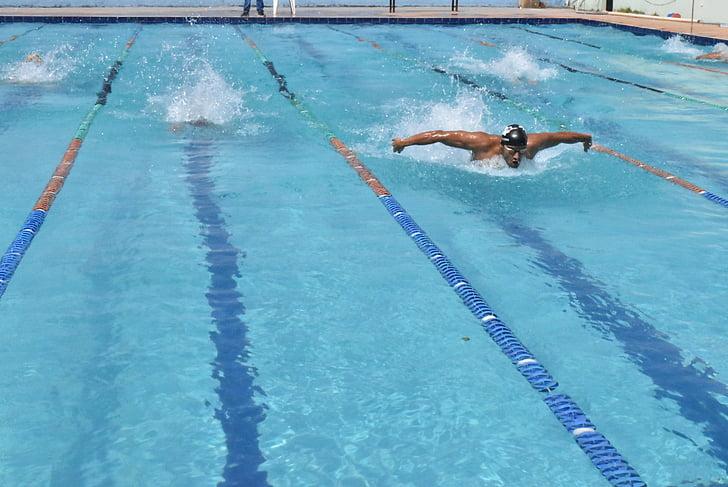 competència, Natació, competir, papallona, piscina, esport, homes