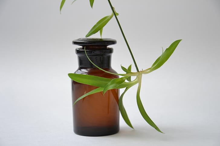 Farmàcia, shtanglas, ampolla de vidre, cristalleria químic, vidre fosc, planta, aigua floral