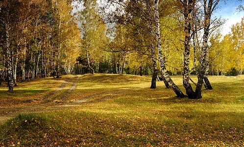 Sonbahar, manzara, Orman, doğa, Altın, Huş ağacı, Güzellik