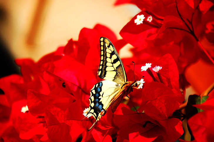 ผีเสื้อ, แมลง, มีสีสัน, ดอกไม้, สีเหลือง, ธรรมชาติ
