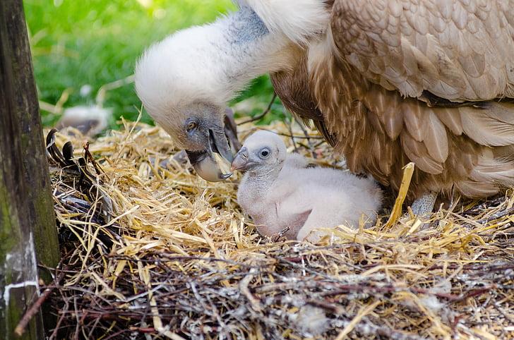 животни, птичи, птица гнездо, птици, пера, малко, природата