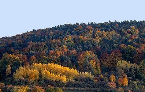 tardor, fulles, fulles de tardor, colors de la tardor, color de la tardor, estat d'ànim tardor, octubre