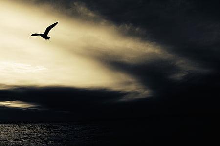 Dove, lento, kehon, vesi, lintu, Linnut, Luonto
