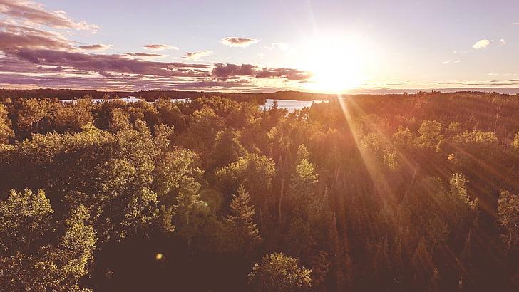skogen, landskap, naturen, solen sken, solljus, soligt, träd