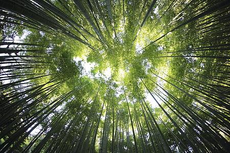Príroda, Príroda, Woods, Forest, Cestovanie, dobrodružstvo, stromy