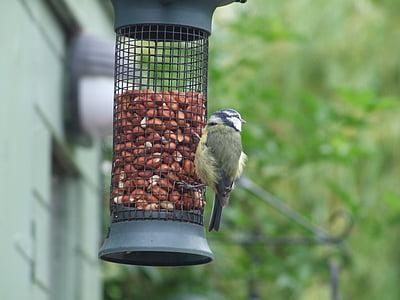 feeder, feeding birds, grain, feeding, bird, wildlife, animal