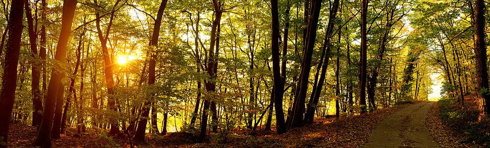sunrise, forest, forest path, autumn, forests, nature, landscape