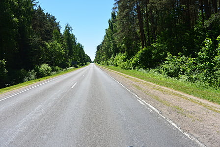 forest road, asphalt, photo