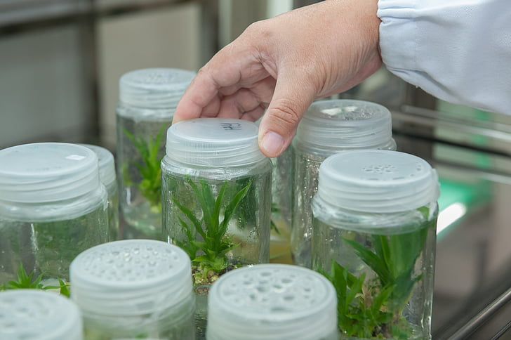 plant tissue culture facility, biotechnology research institute, universiti malaysia sabah, human body part, large group of objects, human hand, one person