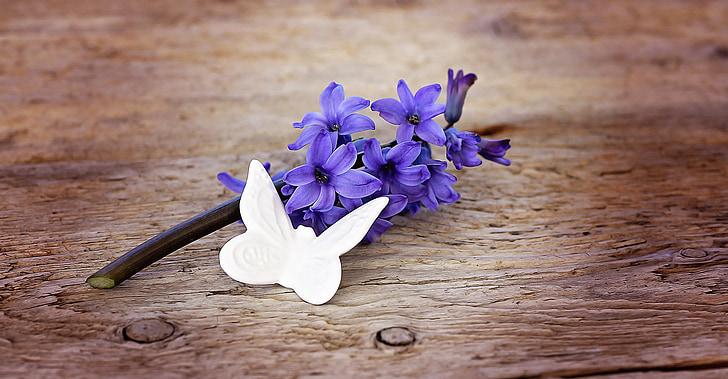 eceng gondok, bunga, bunga, biru, biru bunga, wangi bunga, bunga musim semi