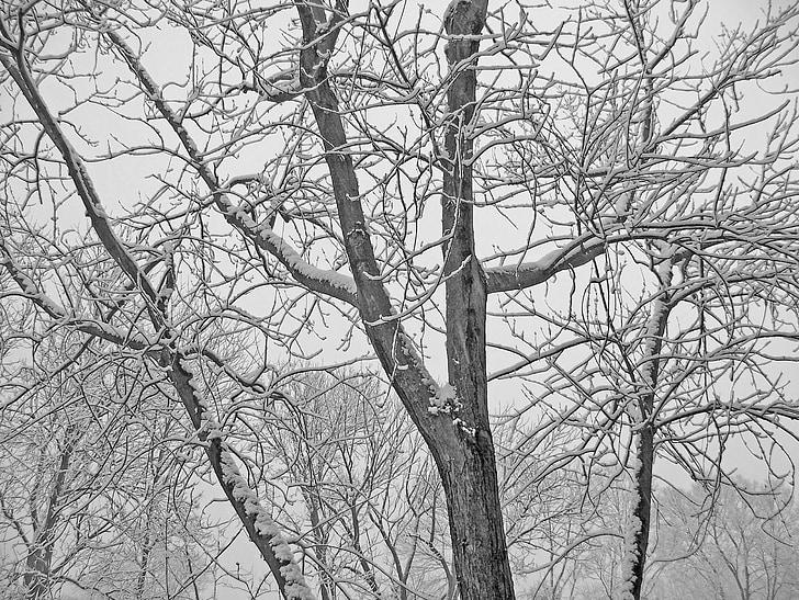trees, snow, christmas, xmas, winter, branches, limbs