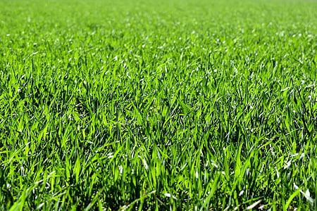 Prado, campo, verde, naturaleza, hierba, paisaje, color verde