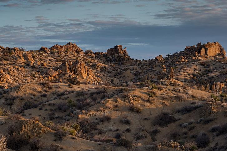 Landschaft, felsigen, landschaftlich reizvolle, Hügel, Kaktus, Joshua Tree Nationalpark, Kalifornien