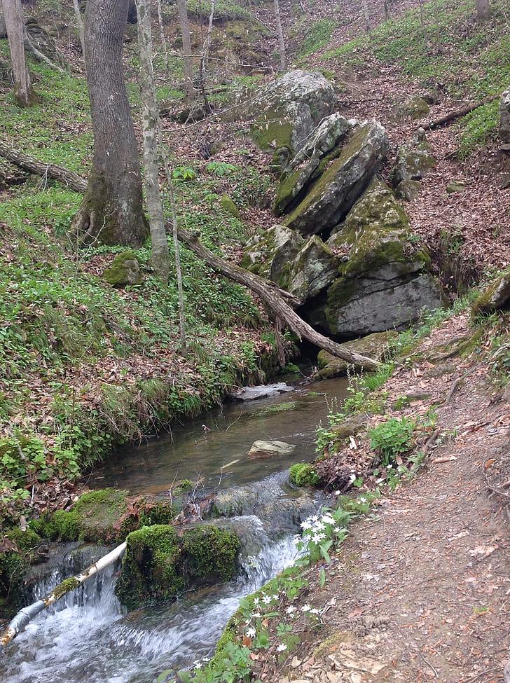 Fontaine, eau, nature, flux de données, jardin, environnement, naturel