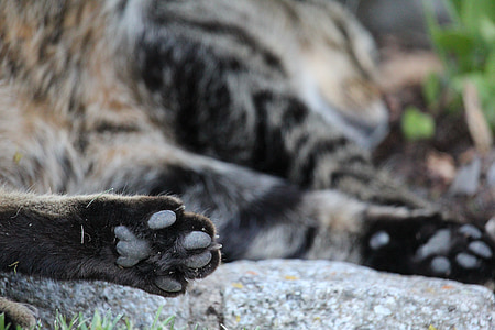 cat's paw, cat, paw print, paw, animal, domestic Cat, pets