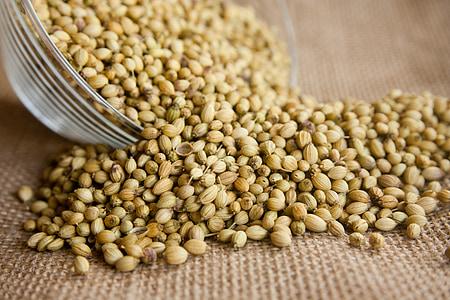 koriander, zaden, kruiden, ingrediënt, kruid, vers, aromatische
