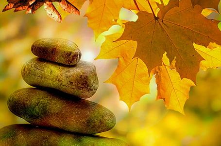 meditació, equilibri, resta, tardor, arbre, arbres, fulles