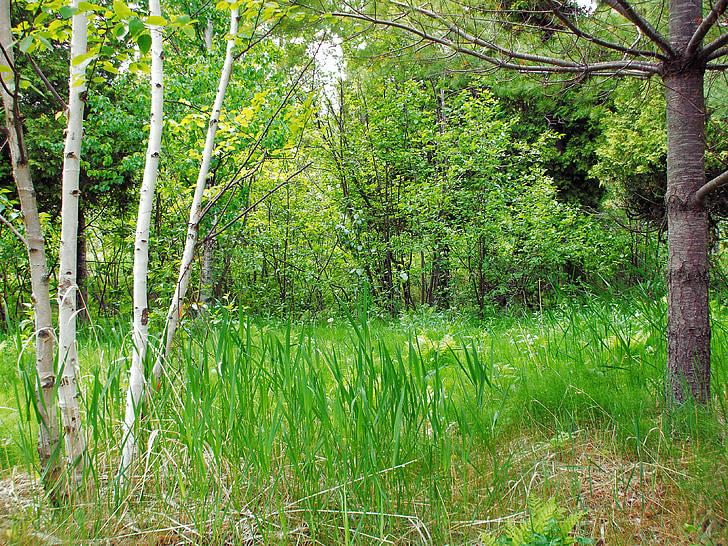 bosc, herba, paisatge, natura, Prat, fusta, primavera
