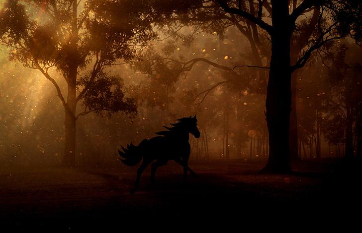 skog, trær, natt, hest, galopp, eventyr, Fantasy