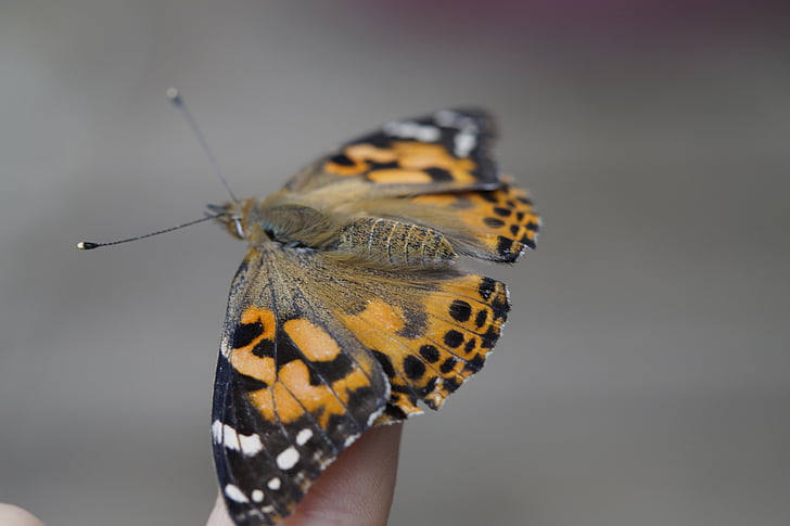 butterfly, finger, hand, insect, nature, landed, close