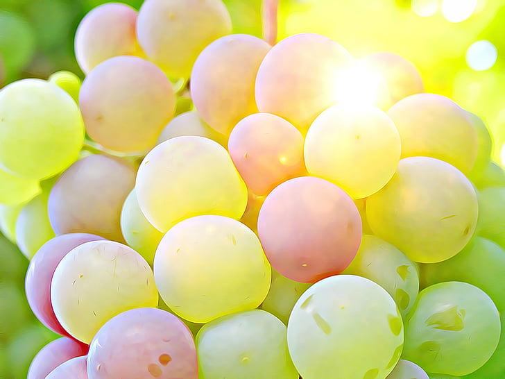 raïm, cultiu, vi, cultiu de clúster, conreu de baies, fruita, salut