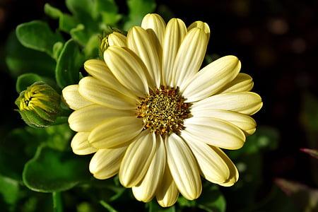 lill, suvel, helekollane, loodus, Suvine lill, suvel taim, kollane