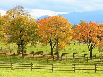 autumn, trees, colorful, mood, leaves, color, landscape