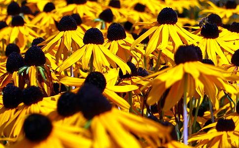 p müts, lilled, lill, kollane, Bloom, Sulgege, Aed
