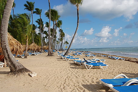 Punta cana, Carib, palmes, Hotel, natura, platja, piscina