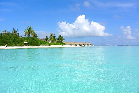 Maldive, nucă de cocos copac, mare, Resort, vara, vacanta, cer