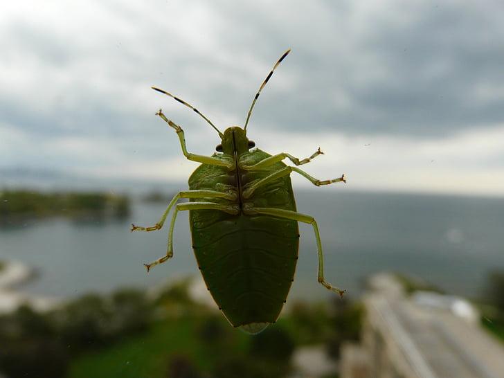 Zelená bug, bug, chrobák, hmyzu, chyby, zelený chrobák, Zelená