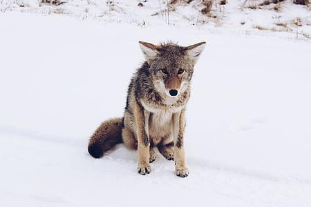 dog, puppy, animal, snow, winter, cold, weather