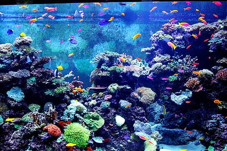 color aquari, peix, peixos, peixos petits, peixos de colors, Aquari, l'aigua