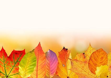 jesień, pozostawia, kolorowe, Spadek liści, spadek koloru, Złota Jesień, liść klonu