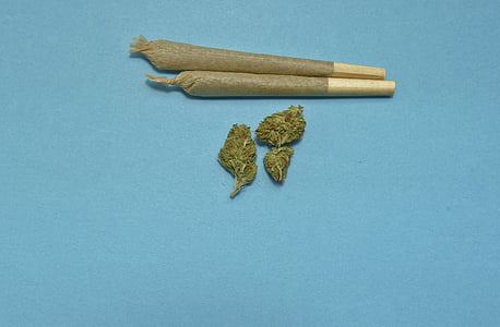marihuana, medicinski, korov, MJ, kanabisa, droga, Studio pucao