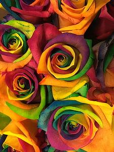 Rosa, flor, flors, natura, Arc de Sant Martí, Roses, Sant Valentí