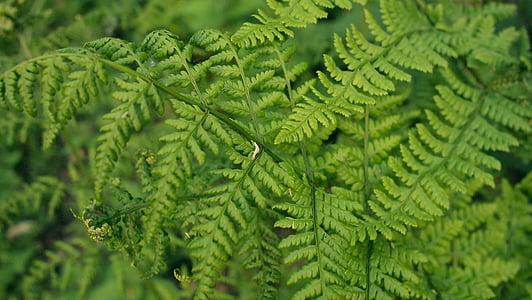 zelená, list, závod, listy, stromy, rostliny, Příroda